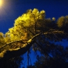 Анапа, вечерняя прогулка