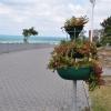 Цветы на набережной Высокого берега