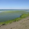 Анапа, зеленое черное море