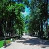 Калуга, аллеи Центрального парка