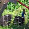 В Московском зоопарке