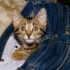 Кошка Фрося