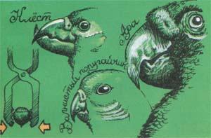 Клест, ара и волнистый попугайчик