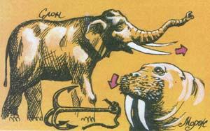 Слон и морж