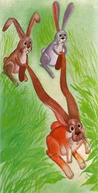 Кролик брюссельский баран