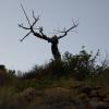 Альбир, природный парк Сьерра Хелада (Serra Gelada)