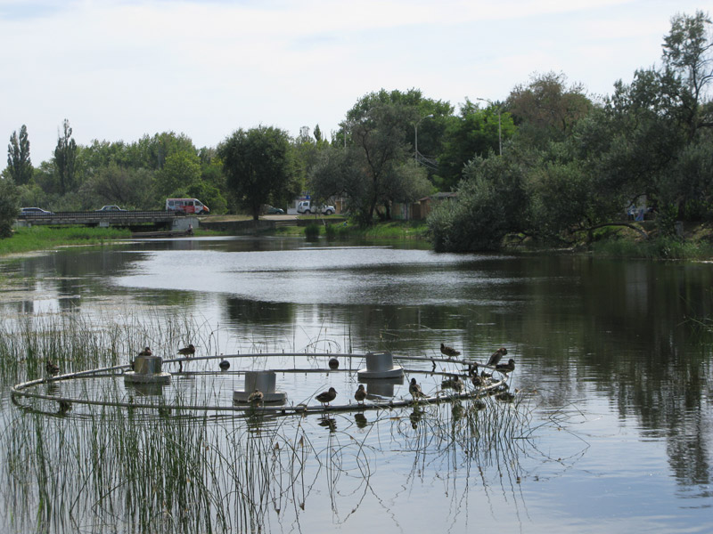 Уточки в речке Анапка