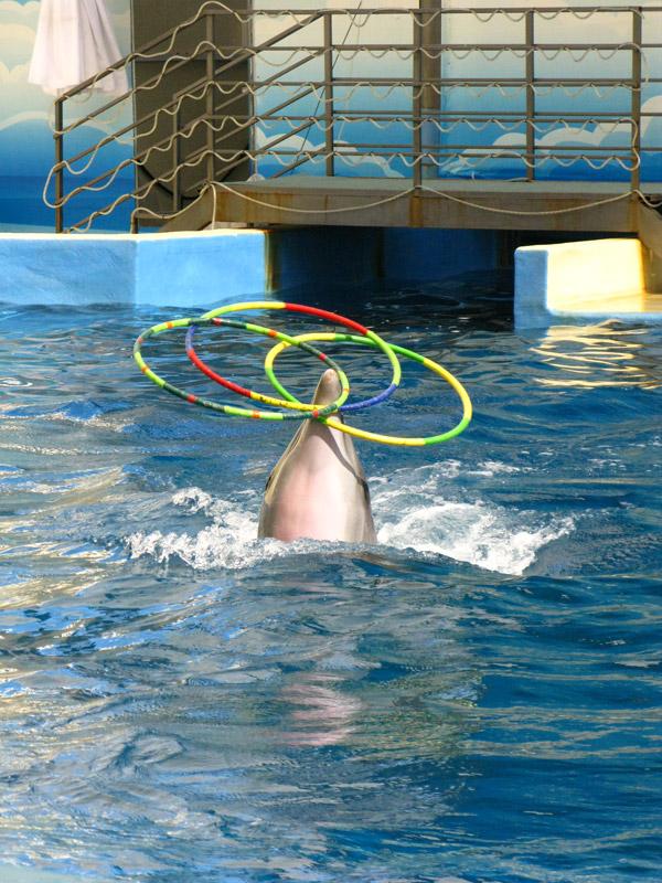 Анапский дельфинарий на Пионерском проспекте