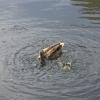 Анапский водный житель