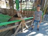 Геленджик, контактный зоопарк в парке Олимп