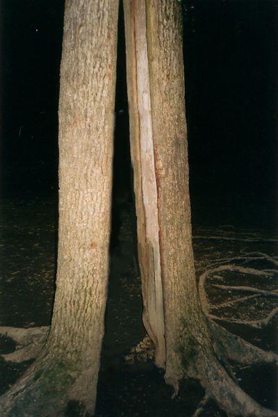 «Дерево желаний» на Гебиусских водопадах