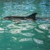В Геленджикском дельфинарии