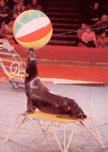 Календарик на 1989 год, серия «Советский цирк», изд. ВРИБ «Союзрекламкультура».