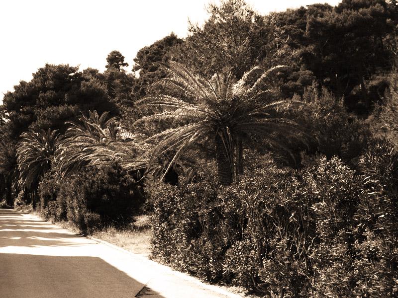 Территория курорта Купари