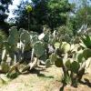 Ботанический сад острова Локрум