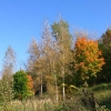 Осенние деньки