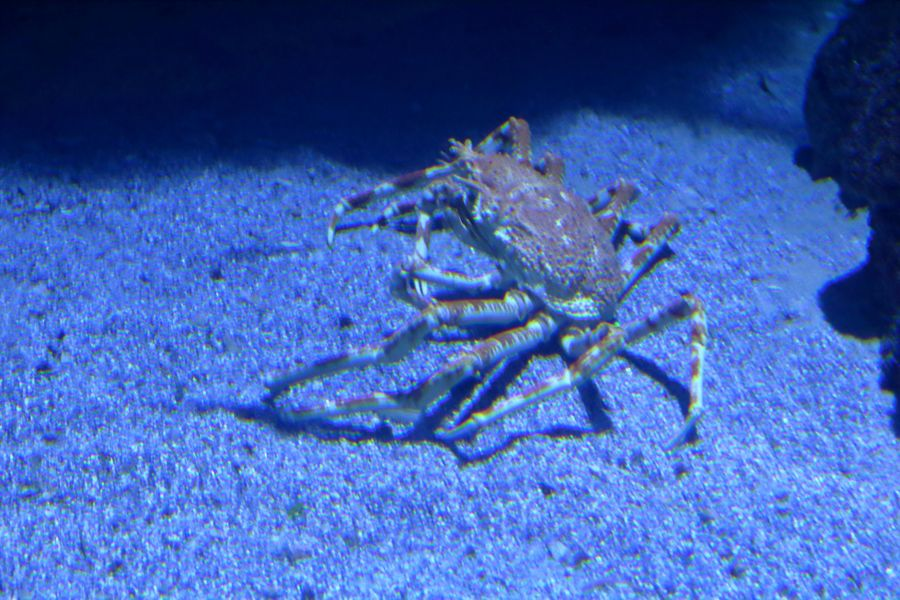 Валенсия, океанариум