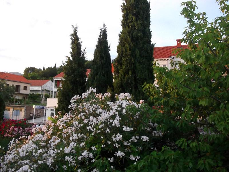 Хорватия, Сребрено, сад вокруг дома