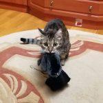 Фрося со своей любимой перчаткой