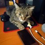Настоящая компьютерная кошка